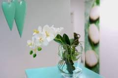 Blume Zahnarztpraxis Rapp